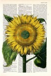 cropped-sunflower-dictionary-page.jpg